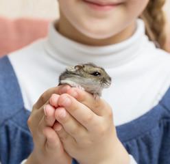 ittle gray hamster in children's hands