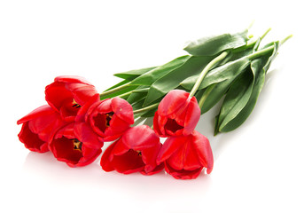 The bright red tulips