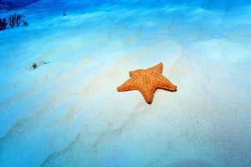 Cushion sea star on sandy bottom