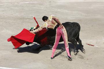 Bullfighter and bull