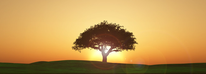 Keuken foto achterwand Beige Widescreen sunset tree landscape
