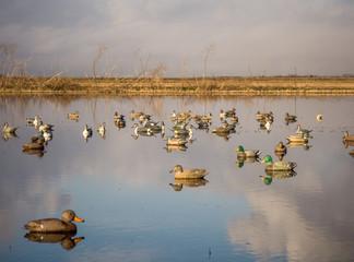 Duck decoys