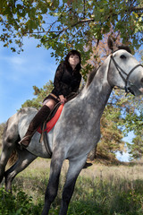 beautiful girl on the horse on the background of the summer fore