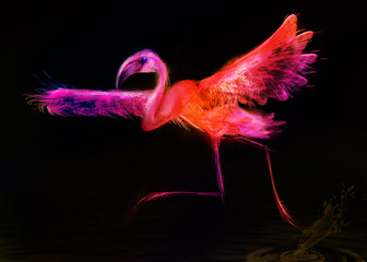 abstract bird.  Flamingo