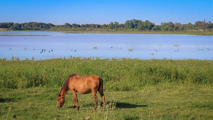 Cheval Réserve Parc national de Doñana Donana