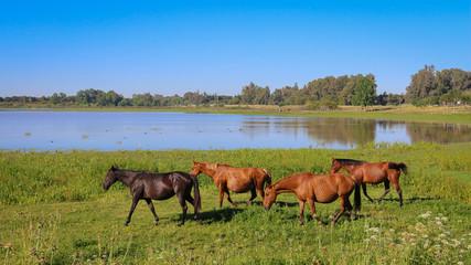 Chevaux Réserve Parc national de Doñana Donana