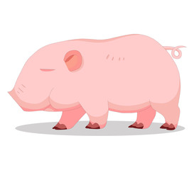 Cute baby pigless cartoon