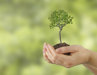 Tree in hands
