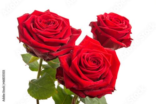 drei rote rosen stockfotos und lizenzfreie bilder auf bild 66835503. Black Bedroom Furniture Sets. Home Design Ideas
