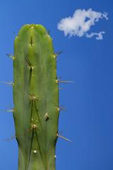 large cactus clouds erotic phallic image