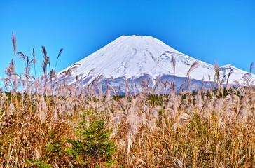 富士山とススキ Wall mural