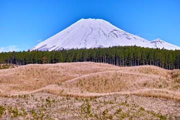 富士山と檜と伐採地 Wall mural