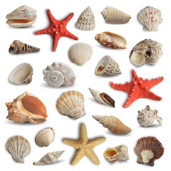 collection of seashells isolated on white background