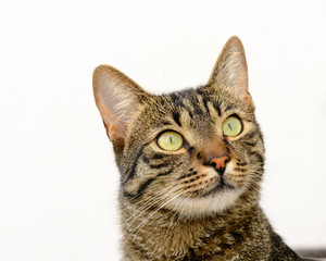 Katze mit wachsamem Blick