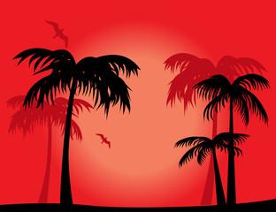 Tropical travel destination