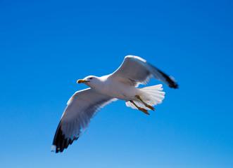 Flock in sky