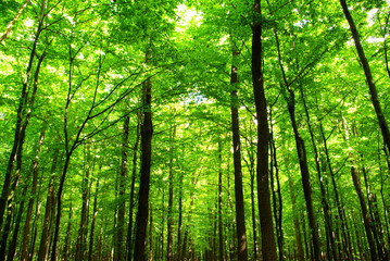 Canvas Prints Forest forest