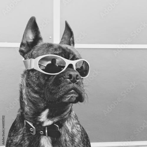 Fototapete Cool dog