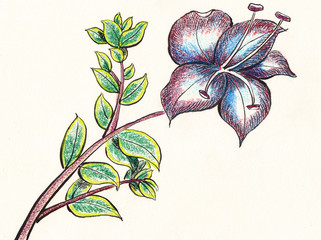 hand draw flower