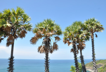 The palm trees