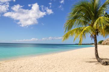 Palm treen on exotic Caribbean beach against blue sky