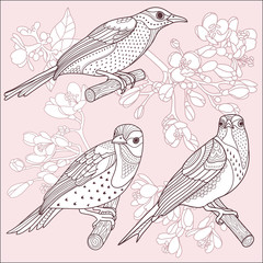 Wall Mural - Birds and flowers