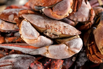 hoto of pile of frozen black crabs