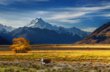 Fototapete - Mount Cook, Canterbury, New Zealand