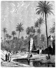Saharian Oasis