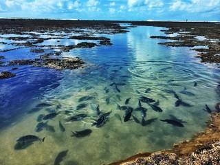 A School of Fish on a Recife Reef