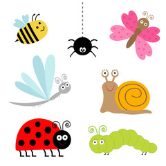 insect set. Ladybug dragonfly butterfly caterpillar spider snail