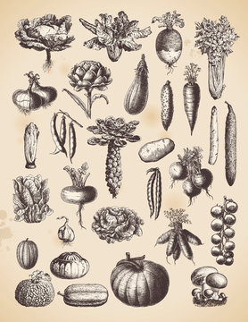 large collection of vegetables