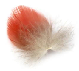 Feather of macaw bird.