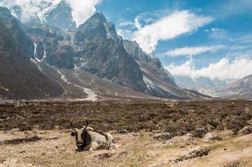 Himalayan Valley - Mount Everest Base Camp Trek