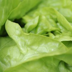salat 41
