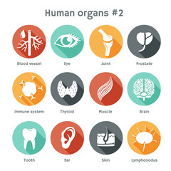 Vector set of flat icons with human organs