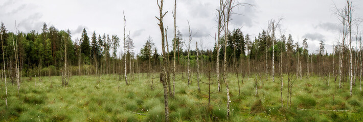 Dubrava swamp panorama