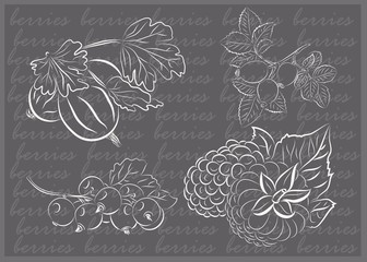 Great hand drawn illustrations of berries isolated on white