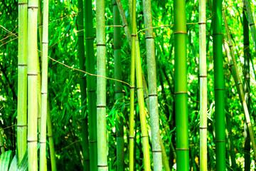 In een bamboebos