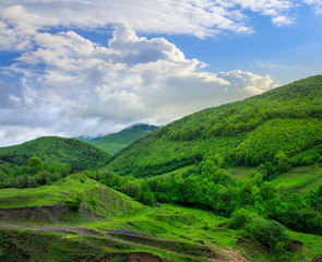 trees near valley in mountains  on hillside