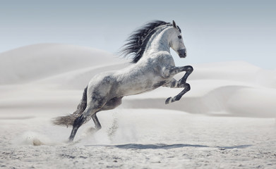 Spoed Foto op Canvas Paarden Picture presenting the galloping white horse