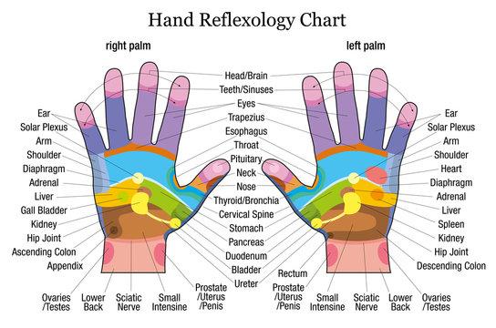 Hand reflexology chart description