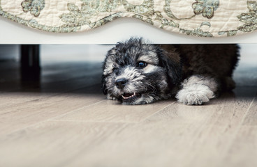 Little angry puppy under the bed