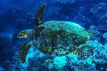 Big turtle undersea