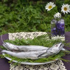 Fresh European hake
