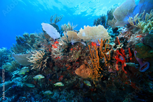 Fototapete Colorful tropical coral reef in the caribbean sea