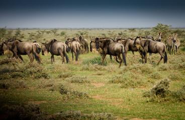 herd of baboons