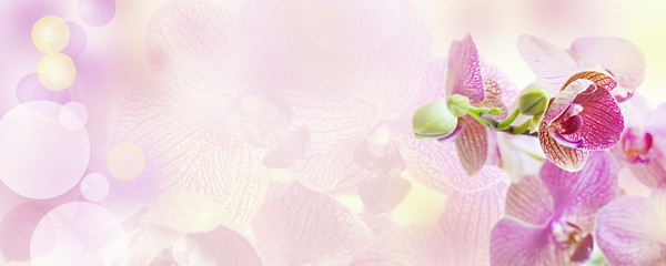 Pink background with orchid flowers