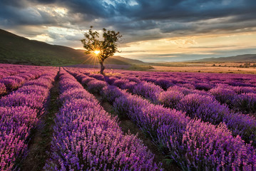 Canvas Prints Cappuccino Stunning landscape with lavender field at sunrise