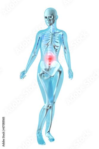 Weibliche Anatomie - Bauchschmerzen\